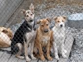 4 апреля - Международный день бездомных животных